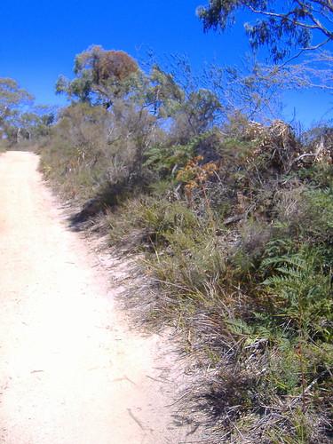 Bush Path
