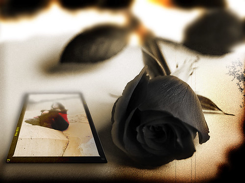 """Black rose for Goddes of tears"" by bionic man20"