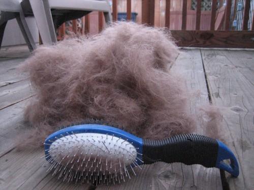 Scout Hair