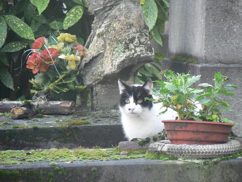 Cimetière Montmartre cats