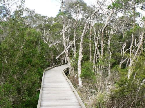 Balcombe Creek