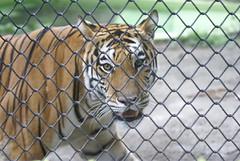 El zoo de Rio (andreasnilsson1976 / Flickr)