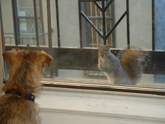 Dog and squirrel staring contest.
