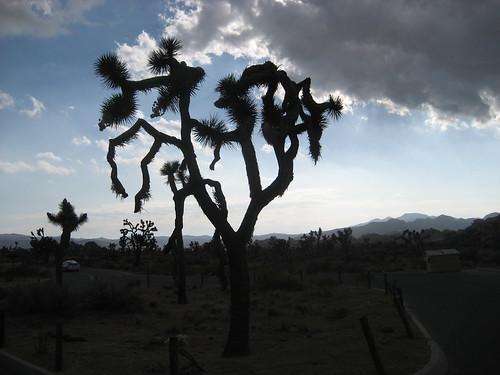 Truffle Truffle Tree