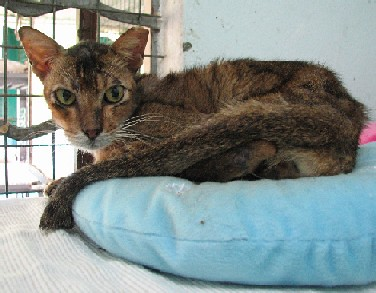 Cattery_FivCats_20070101_01x