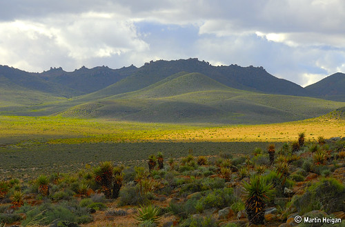 Northern Cape Landscape (Aloe habitat)