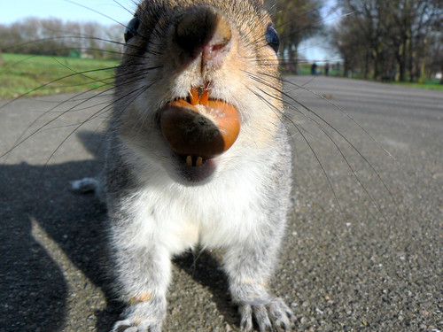 Your nuts! Sir