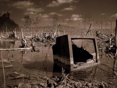 Swamp TV.