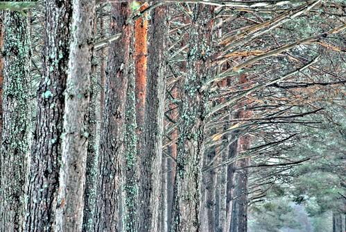 Forest of shadows / Bosque de sombras