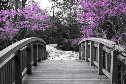 The Bridge to Spring - Part 2 by WisDoc @ Flickr.com