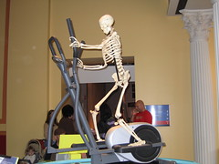 Skeleton on an elliptical machine