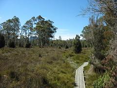 Wild grass and moss