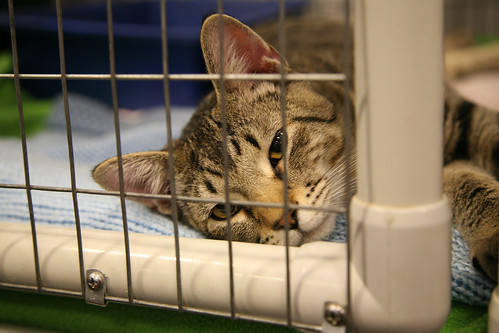 Picture of a cat in a cage, from Laughing Squid, released under Creative Commons license
