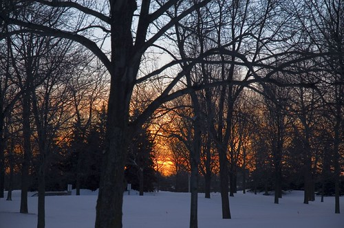 PAD sunrise through trees