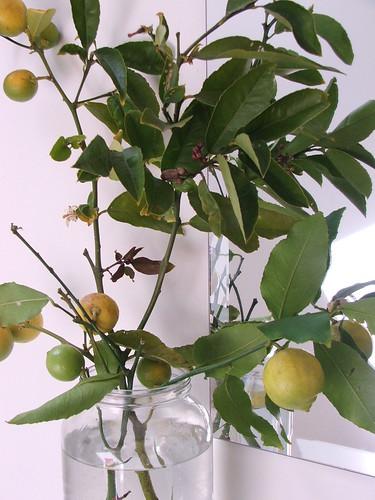Lemons by you.