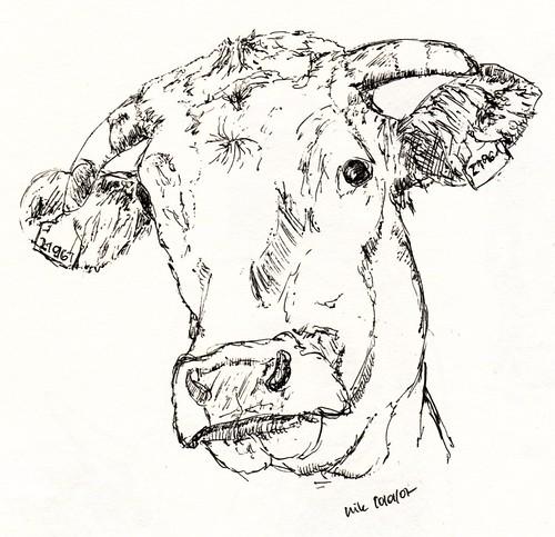 Hellbraune Kuh