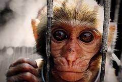 A portrait of a monkey