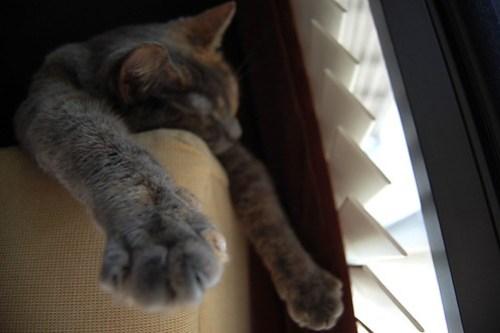Cat snoozing