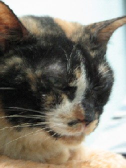 Cattery_FivCats_20070101_07x