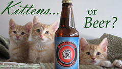 Kittens... or Beer?