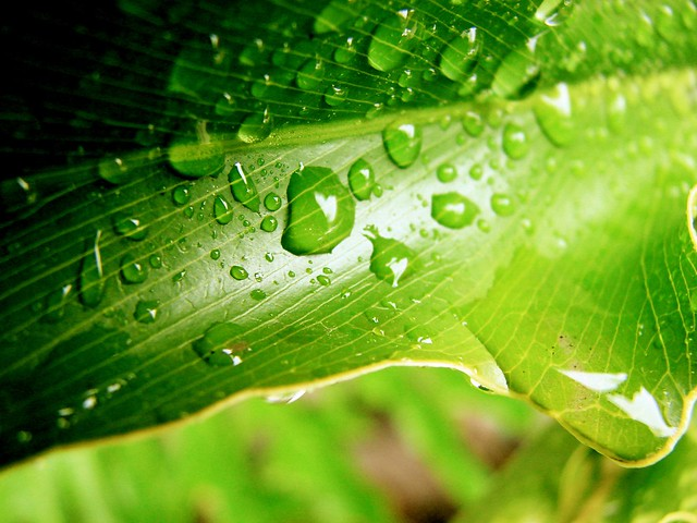 Constant Faith, green leaf with dew drops