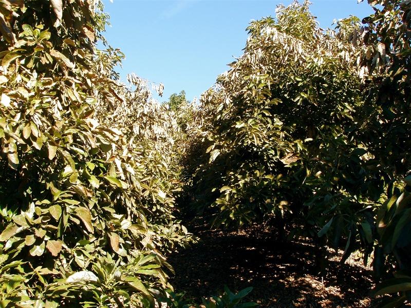 Inside avo grove 1.JPG