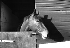 Stabled horse
