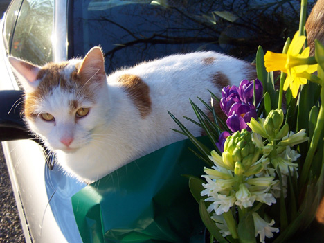 Carmelo & Flowers