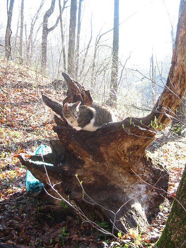buster on tree trunk