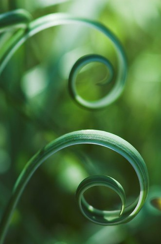 Golden spirals by fd