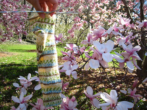 traveling sock with magnolias