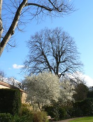 Poissy trees