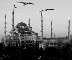 Istanbul - Birds in Flight