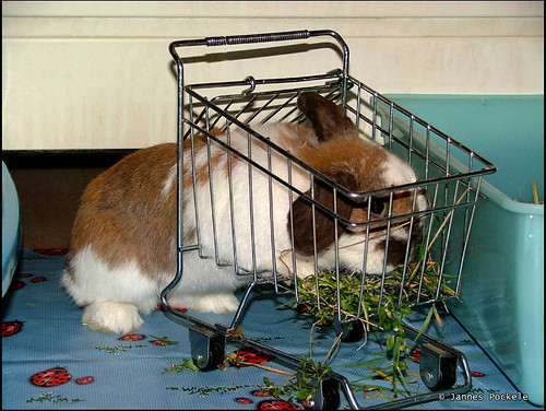 having fun with the shopping cart