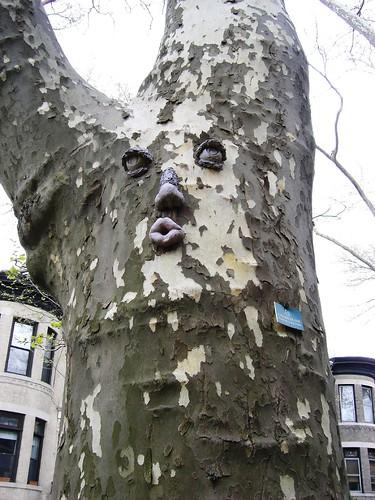 Bay Ridge Tree