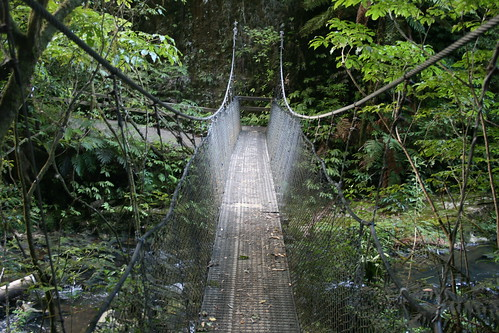 Puente colgante Ruakuri Bushwalk