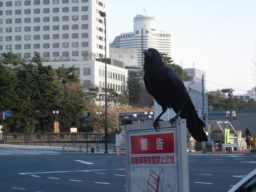 Cuervo en Tokio