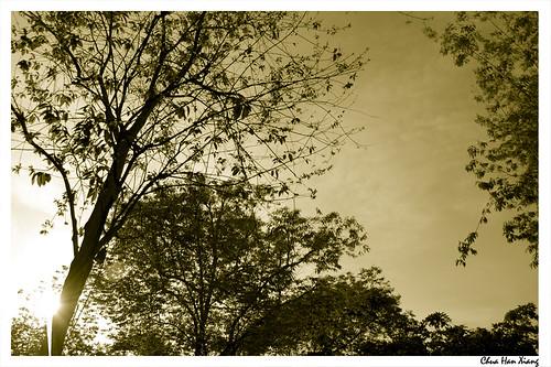 Esplanade-Trees