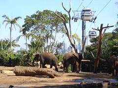 Taronga Zoo (10)