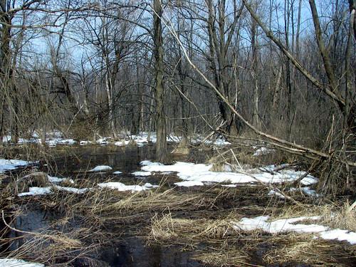 2007-03-13 004