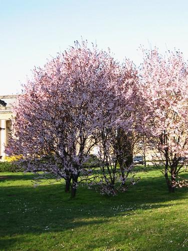 Wiosennie (beżowo)