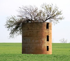 Tree growing in old silo