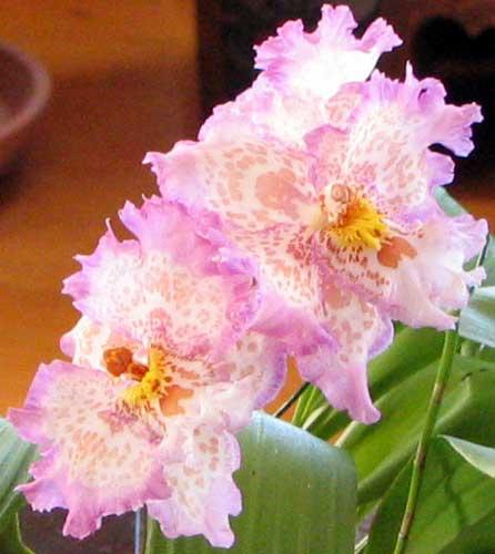 2007-02-24-037_crop_sm