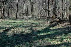 Greening spot