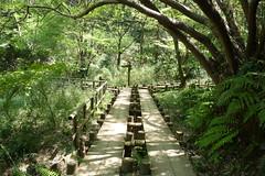 生田緑地(Ikuta Ryokuchi, Japan)