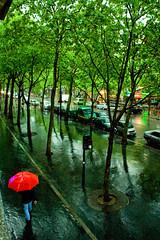 Rain forest in Paris