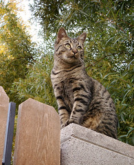 Friday Cat Blogging, Hurry!