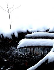 The Plummer's Hollow Run in winter