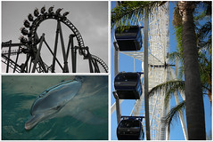fun at Sea World and WB Movie World
