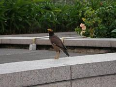 21.KLCC上的鳥